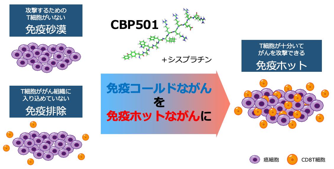 CBP501+シスプラチン